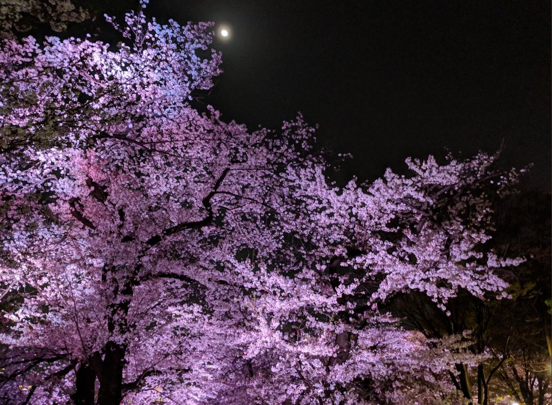 आंकड़ों के मुताबिक साल 2021 में क्योटो शहर में बंसत के मौसम की 26 मार्च को ही शुरुआत हो गई. प्राचीन दस्तावेजों और डायरी के मुताबिक आखिरी बार इतनी जल्दी फूल सन 812 में खिले थे.