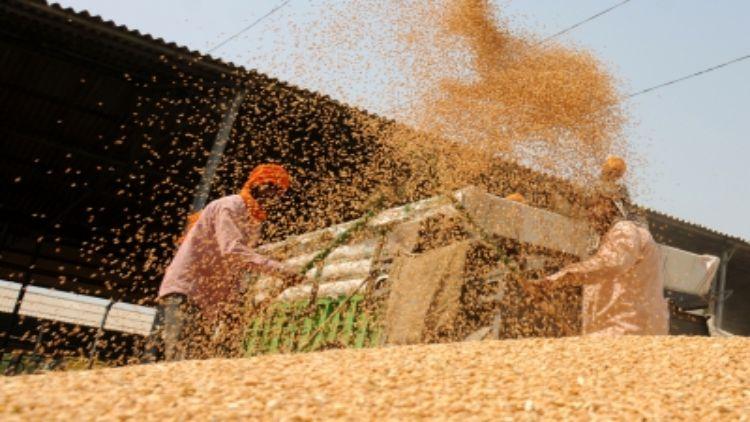 गेहूं खरीद : केंद्र सरकार ने किसानों के खाते में सीधे भेजे 49,965 करोड़ रुपये